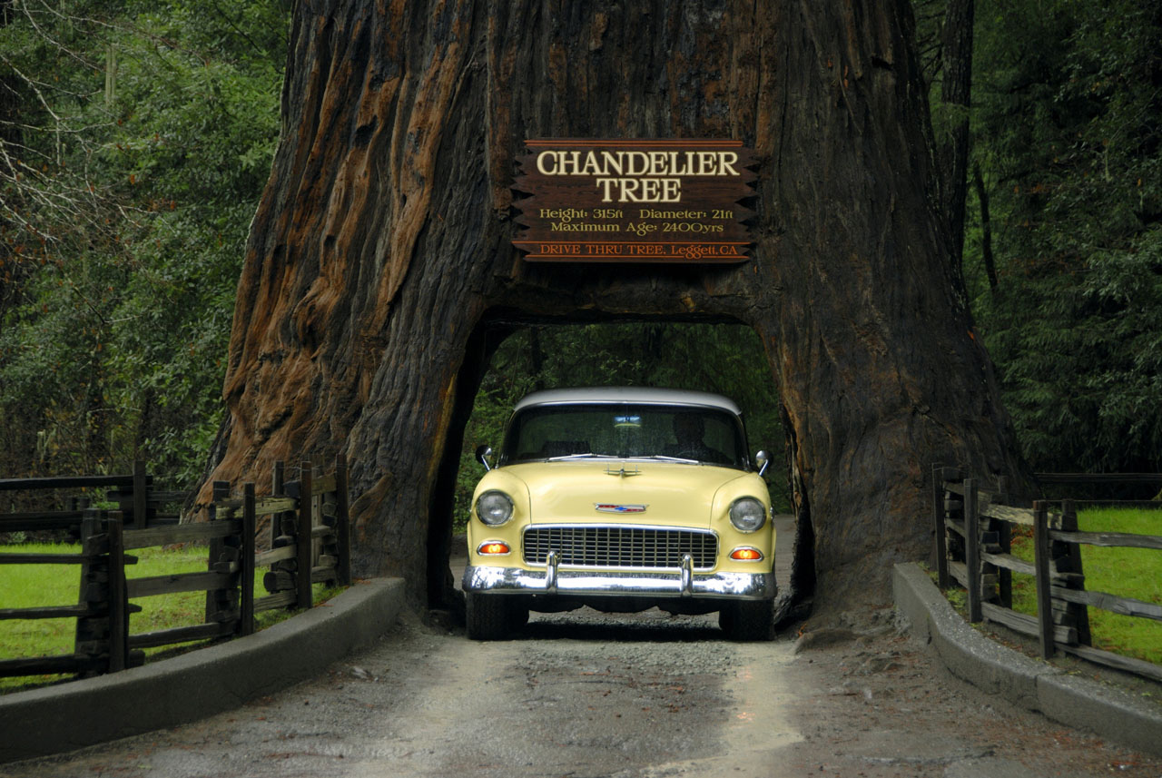 Chandelier Drive Thru Tree with 1951 Chevy